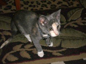 Rachels' cat, Lila.